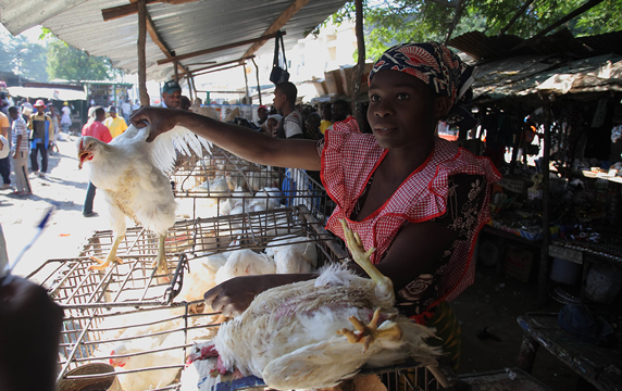 At the Xipamanine traditional market, in Maputo, trader Augusta Thomas sells chickens (photo credit: ILRI/Mann).