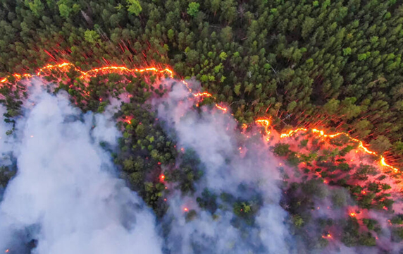 Fires in Siberian forests