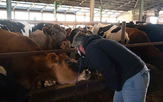 Selena Brown and cows