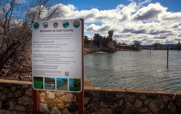 Signs warning of the dangers of cyanotoxins are posted at public parks around Clear Lake