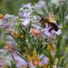 What happens if pollinators and plants drift apart?